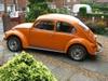 Molly, my Orange Bug.