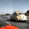 My bug.