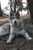 husky umka 8 maanden